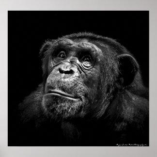 """Captive Exposure"" Wildlife Chimp Artwork Portrait Poster"