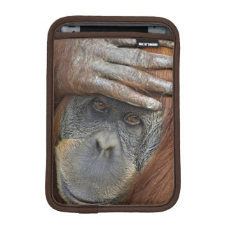 Captive female Sumatran Orangutan iPad Mini Sleeve