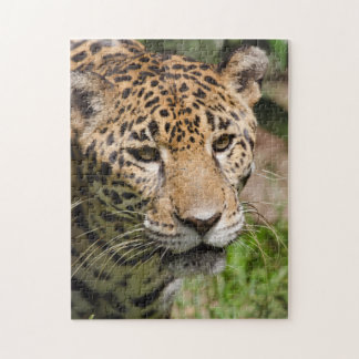 Captive jaguar in jungle enclosure 2 jigsaw puzzle