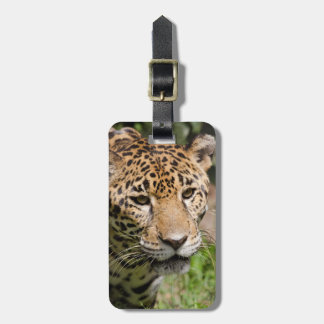 Captive jaguar in jungle enclosure 2 luggage tag
