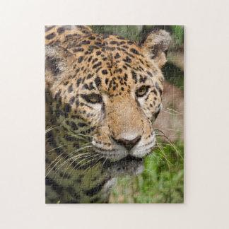 Captive jaguar in jungle enclosure 2 puzzles