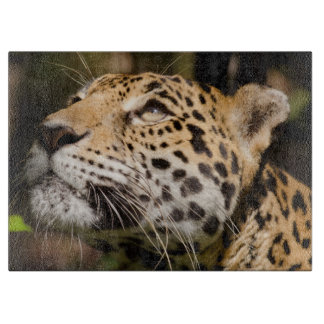 Captive jaguar in jungle enclosure 3 cutting board