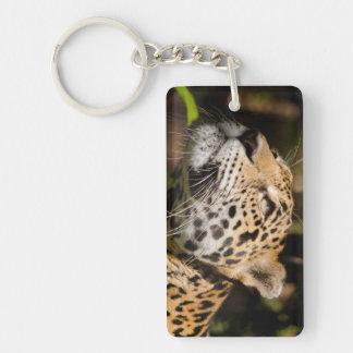 Captive jaguar in jungle enclosure 3 Double-Sided rectangular acrylic key ring