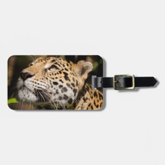 Captive jaguar in jungle enclosure 3 luggage tag