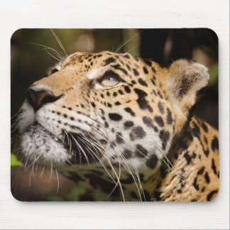 Captive jaguar in jungle enclosure 3 mouse pad