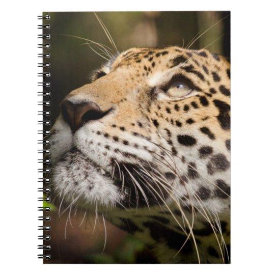 Captive jaguar in jungle enclosure 3 notebooks