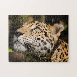 Captive jaguar in jungle enclosure 3 puzzle