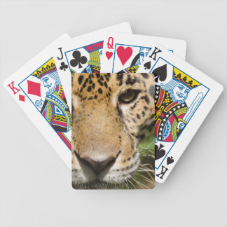 Captive jaguar in jungle enclosure bicycle playing cards