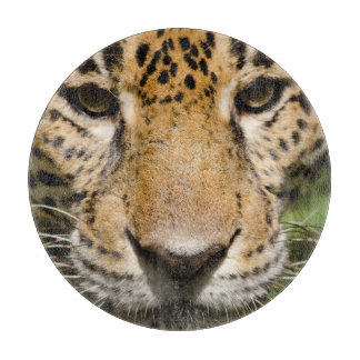 Captive jaguar in jungle enclosure cutting board