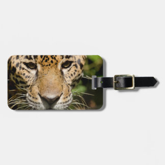 Captive jaguar in jungle enclosure luggage tag