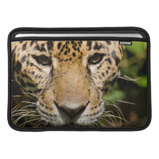 Captive jaguar in jungle enclosure MacBook sleeve