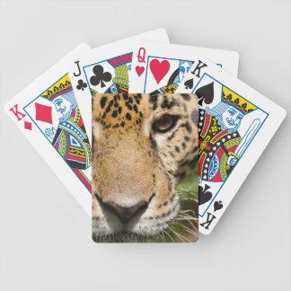 Captive jaguar in jungle enclosure poker deck