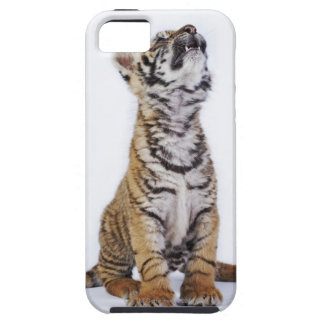 Captive, South Africa 2 iPhone 5 Cases