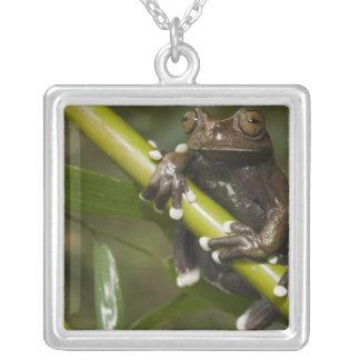 Captive Tapichalaca Tree Frog Hyloscirtus 2 Square Pendant Necklace