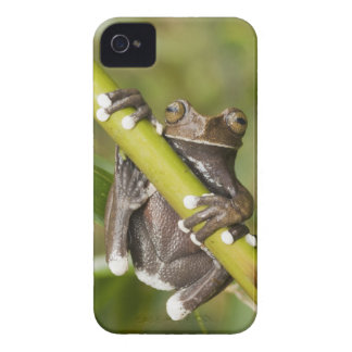 Captive Tapichalaca Tree Frog Hyloscirtus Case-Mate iPhone 4 Case