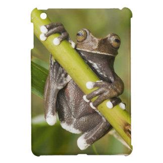 Captive Tapichalaca Tree Frog Hyloscirtus Cover For The iPad Mini