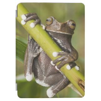 Captive Tapichalaca Tree Frog Hyloscirtus iPad Air Cover
