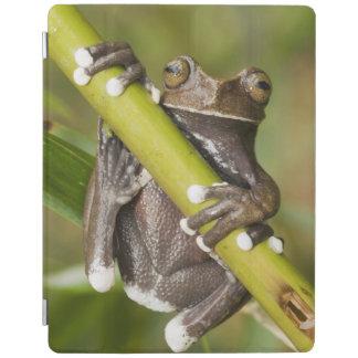 Captive Tapichalaca Tree Frog Hyloscirtus iPad Cover