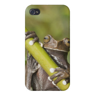 Captive Tapichalaca Tree Frog Hyloscirtus iPhone 4/4S Case