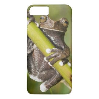 Captive Tapichalaca Tree Frog Hyloscirtus iPhone 8 Plus/7 Plus Case