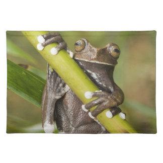 Captive Tapichalaca Tree Frog Hyloscirtus Placemat