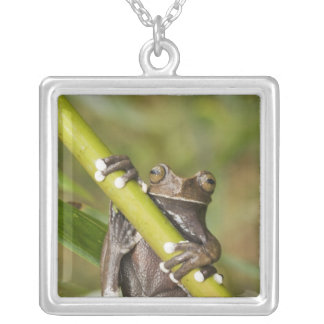 Captive Tapichalaca Tree Frog Hyloscirtus Silver Plated Necklace