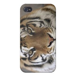captive Tiger, Folsom City Zoo Sanctuary, iPhone 4/4S Cases