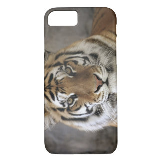 captive Tiger, Folsom City Zoo Sanctuary, iPhone 8/7 Case