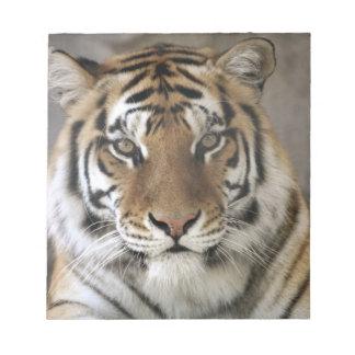captive Tiger, Folsom City Zoo Sanctuary, Notepad