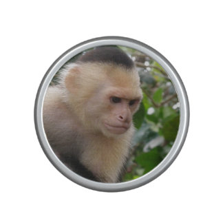 Capuchin Monkey Speaker