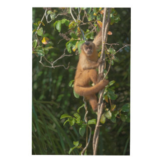 Capuchin Monkey Climbing Wood Wall Art