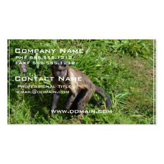 Capuchin Monkey Mugging for the Camera Pack Of Standard Business Cards