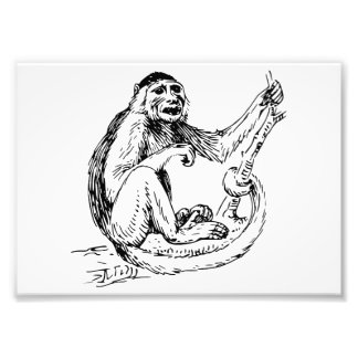 Capuchin Monkey Photographic Print