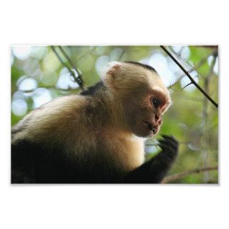 Capuchin Monkey Photo Print