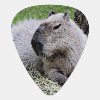capybara 07 plectrum