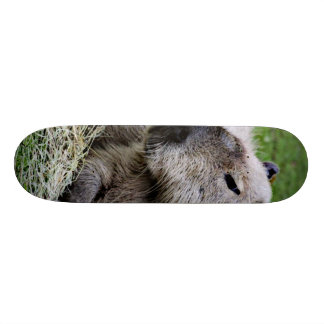 capybara 07 skate board decks