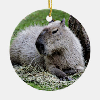 capybara, christmas ornament