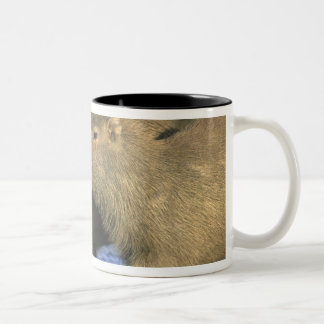 Capybara, Hydrochaeris hydrochaeris), world's Mugs