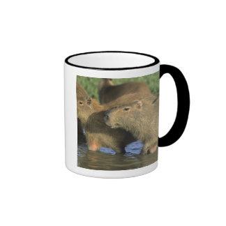 Capybara, Hydrochaeris hydrochaeris), world's Ringer Mug