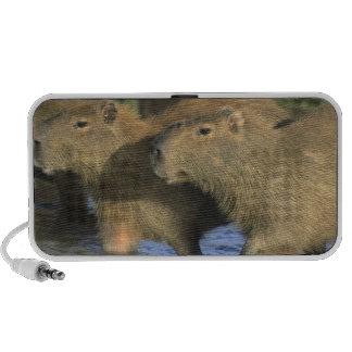 Capybara, Hydrochaeris hydrochaeris), world's Mini Speaker