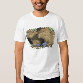 Capybara, Hydrochaeris hydrochaeris), world's Tees