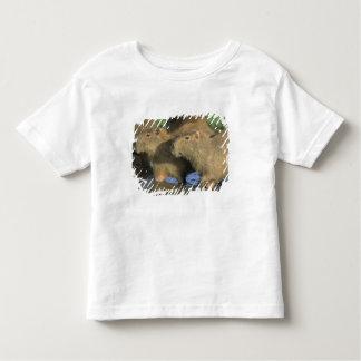 Capybara, Hydrochaeris hydrochaeris), world's Toddler T-Shirt