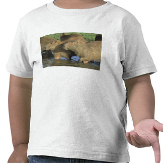 Capybara, Hydrochaeris hydrochaeris), world's T-shirts