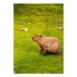 Capybara Photo Print