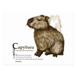 capybara - sepia はがき