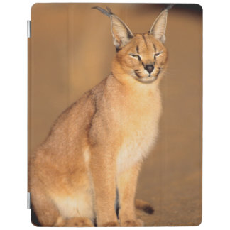 Caracal portrait, Harnas Private Reserve iPad Cover