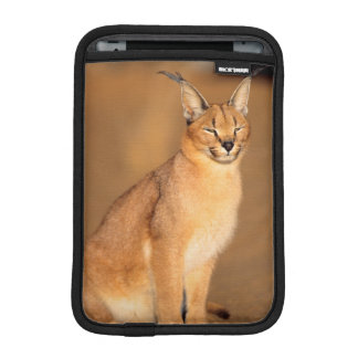 Caracal portrait, Harnas Private Reserve iPad Mini Sleeve