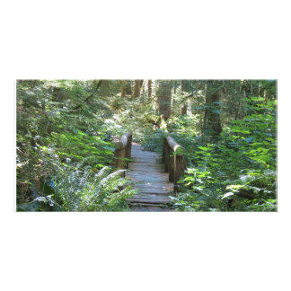 Carbon River Rain Forest Nature Trail Picture Card
