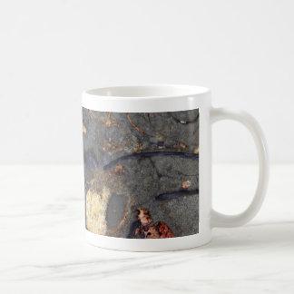 Carbonate rock with fossils basic white mug