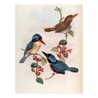 Carcineutes Melanops (Blue-Faced Kingfisher) Postcard
